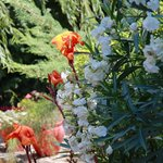 Le jardin et sa végétation luxuriante
