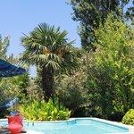 Le jardin autour de la piscine