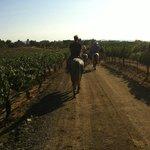 Wine Country Horseback Ride