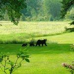 Mama Bear & 2 cubs