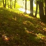 scorcio passeggiando per il bosco