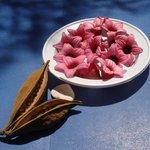 Composizione con semi e fiori di Brachichiton