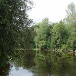 Lake at Inglis Falls