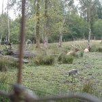 Elk, sandhill crane and wild turkeys