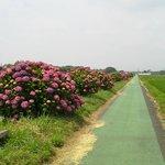 Fureai Hydrangeas Road