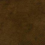 The Carpet that smells like urine