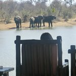 View of herd of elephants from right in front of Gomo Gomo