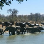 Herd of elephants drinking right in front at Gomo Gomo waterhole