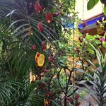 Flowers where the hummingbirds feed