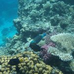 Beautiful corals and fishes