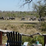 View of ellies at the lodge waterhole as we arrived at the lodge