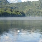 lago con cigno
