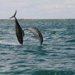 Delfini selvaggi