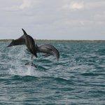 Delfini selvaggi... che spettacolo!!!!!!!