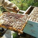Le api di Franco