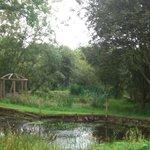 Ponds area
