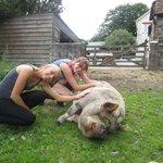 Gloria the pig!