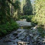 jameson creek fro the bridge