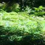 fern glades abound