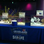 Come learn all about our Sea Turtles!