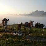 Les ânes à côté du chalet