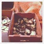 always fresh oysters!