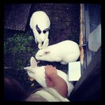 It was like having a private petting zoo. Here's my daughter feeding and petting the rabbits.