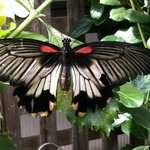 Beauty of nature - Mackinaw Butterfly house