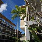 пальмы в отеле