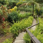 Footpath leading downhill into Savusavu