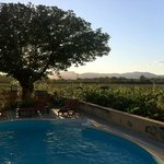 Vine and pool / Vigne et piscine