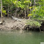A crocodile on the tour at Cooper Creek