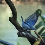 Vogel in tuin