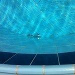 Gaffel i poolen