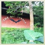 The Bat Jungle