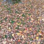 Fall Natural carpet
