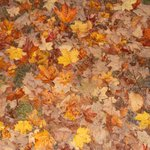 """""""When the leaves come falling down"""""""