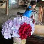 Nemo riding his bike and the lovely fresh table flowers