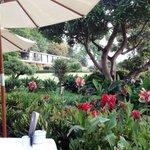 Le jardin depuis le PDJ
