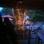 Sassa Bar