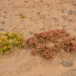 Plants on the beach in the area