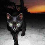 Beach cat, Turtle Beach.