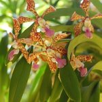 orchids in gardens