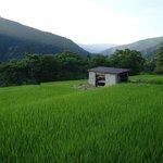 Nearby rice fields