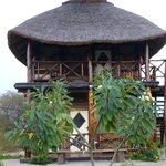 Notre bungalow !