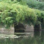Overgrown Piers of a demolished bridge