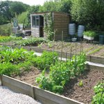 Our vegetable plot