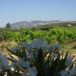 vue fantastique de la terrasse sur les dentelles de Montmirail