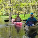 Paddling Through he Cypress Forest.