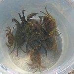 Crab Fishing, Brixham Harbour